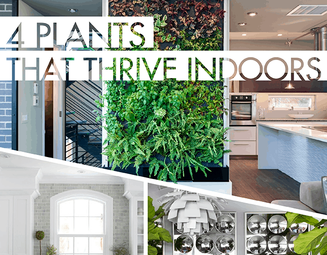 DIY  // 4 PLANTS THAT THRIVE INDOORS