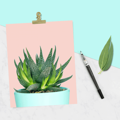 FREE cactus print and tech wallpapers - three designs to choose from