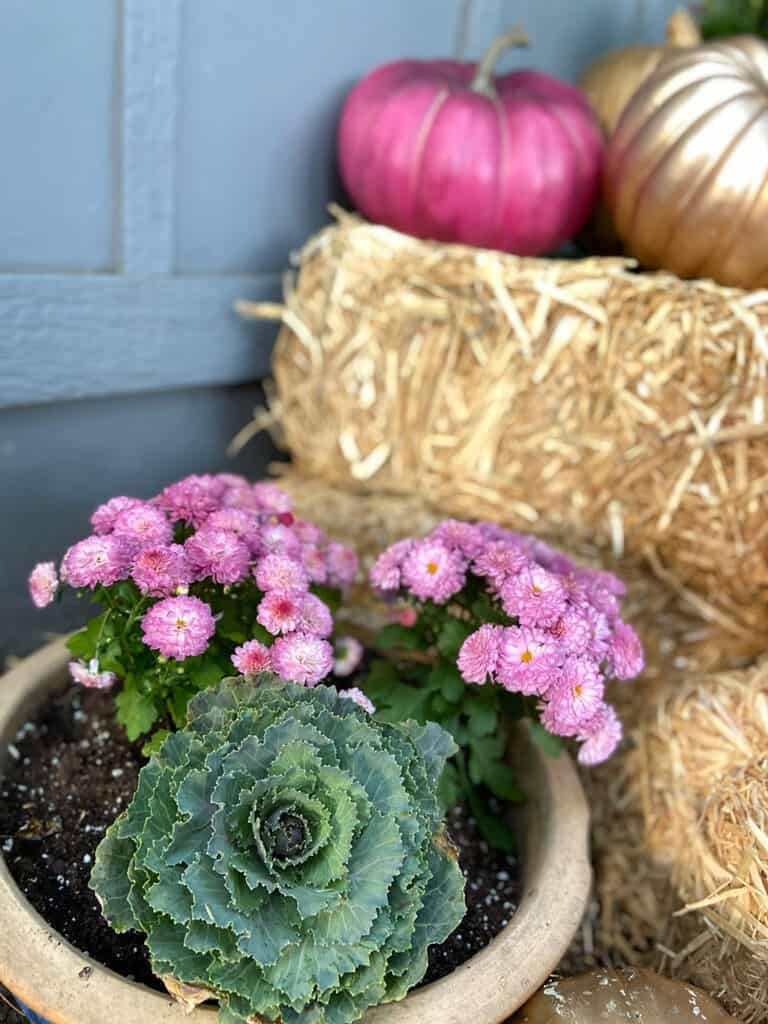 A colorful and modern outdoor fall decor with plants and pumpkins