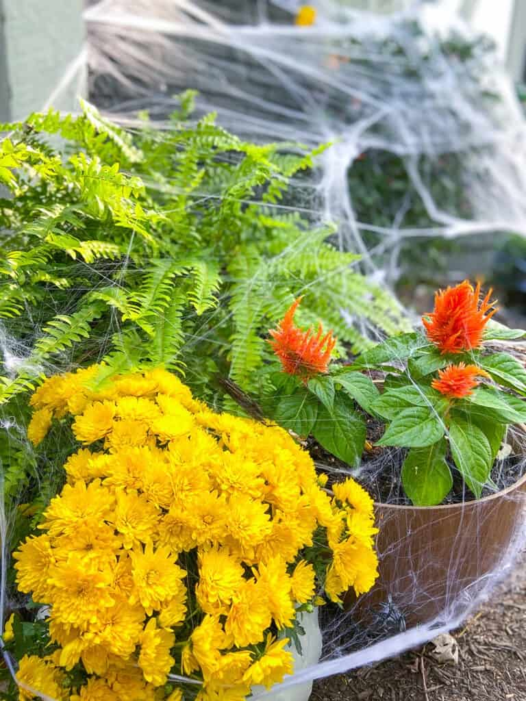 spider webs and plants for halloween decor