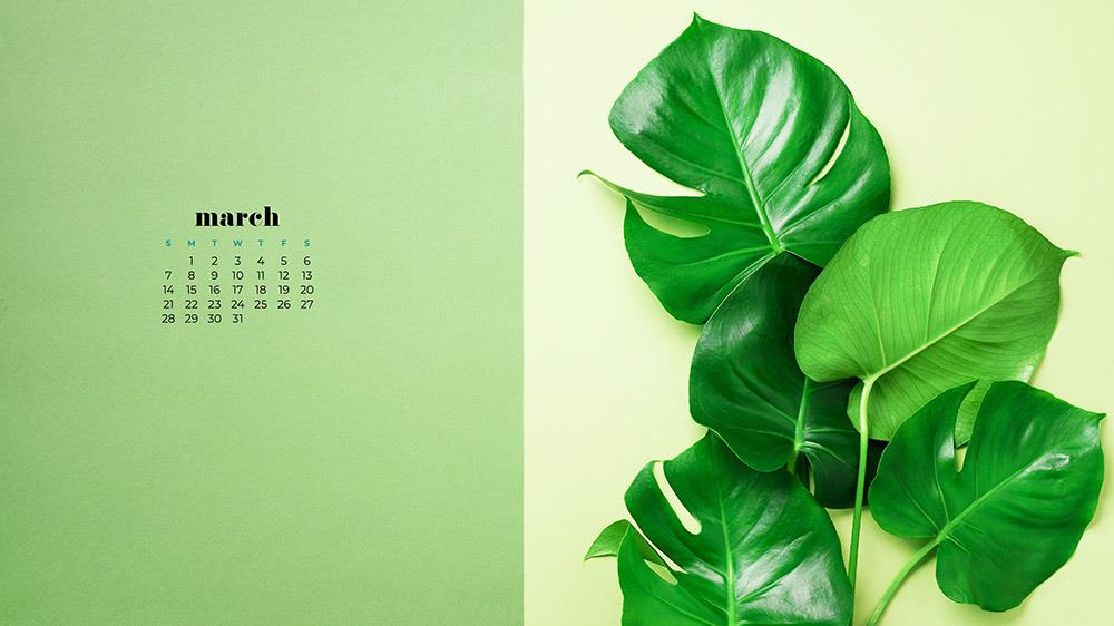 Green palm leaf wallpaper for March on green background