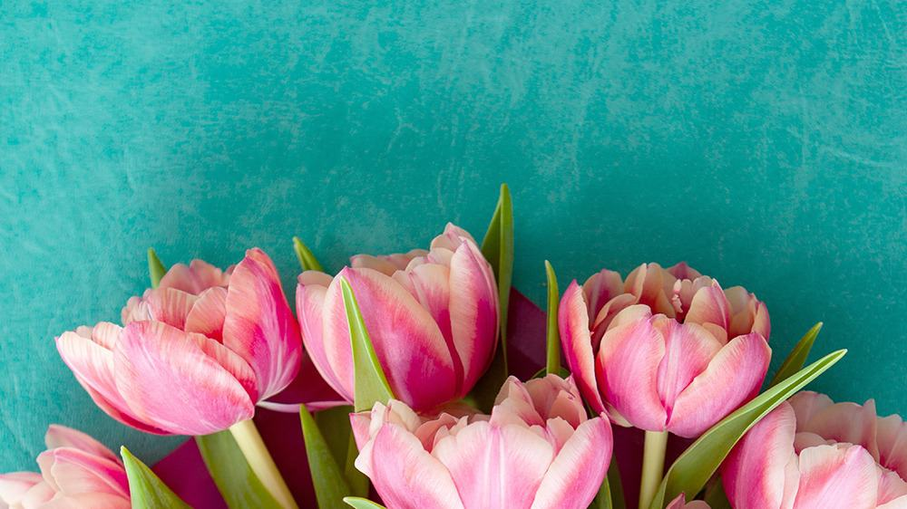 free plants desktop wallpaper with no calendar pink tulips on turquoise background
