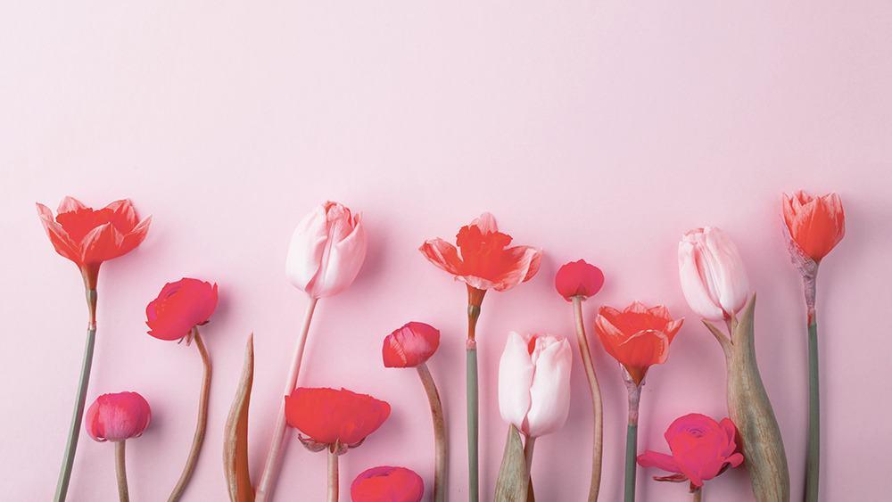 free floral desktop wallpaper with no calendar tulips