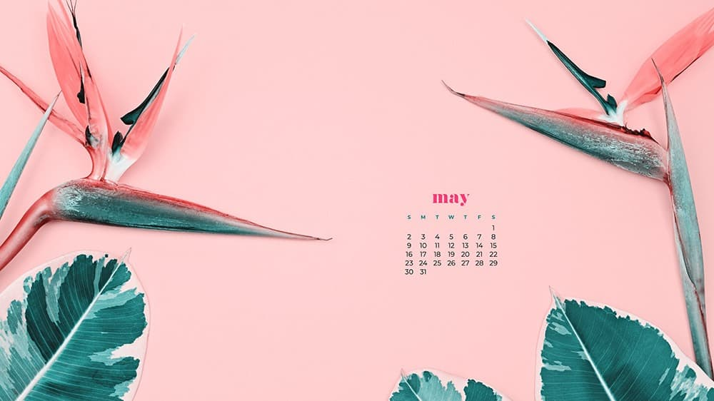 summer flowers and green leaves on pink background