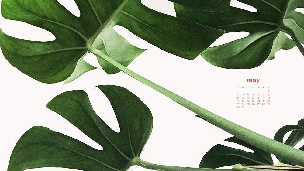 Green palm leaves on a clean white background