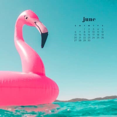 pink flamingo float on the turquoise ocean
