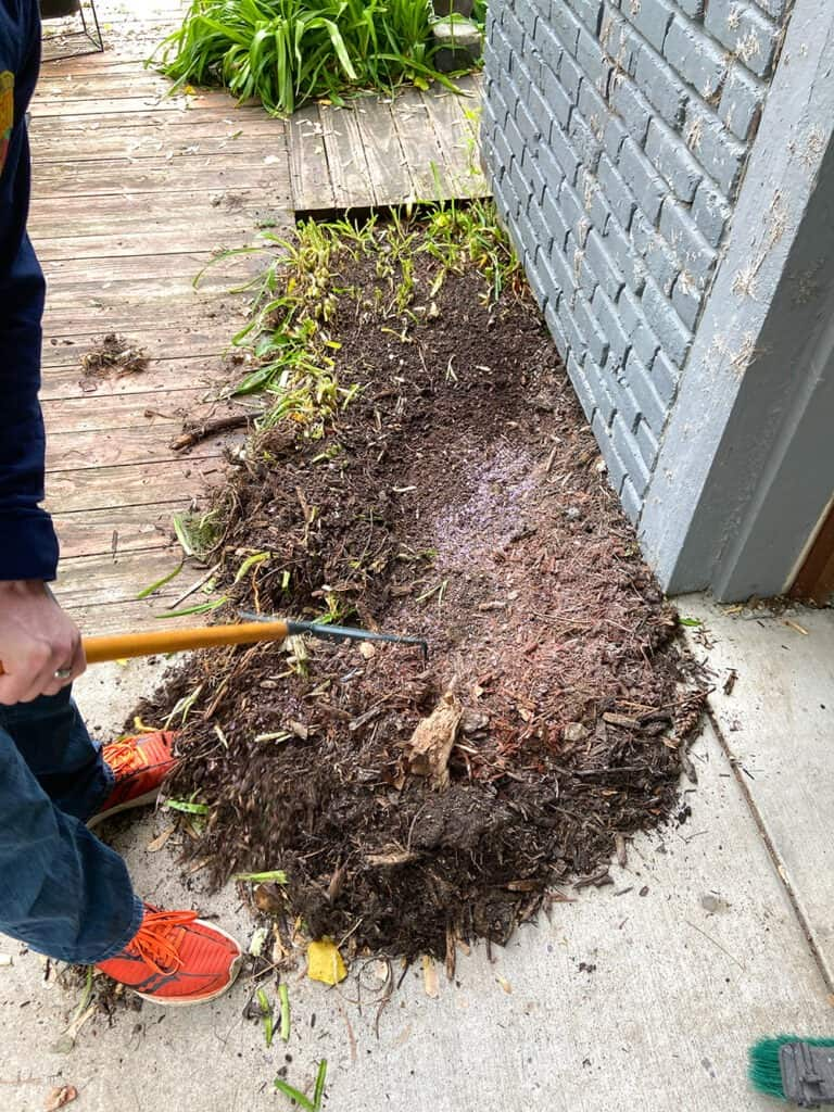 digging up lilies in a small landscaping bed