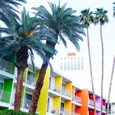 saguaro palm springs and palm trees - rainbow hotel