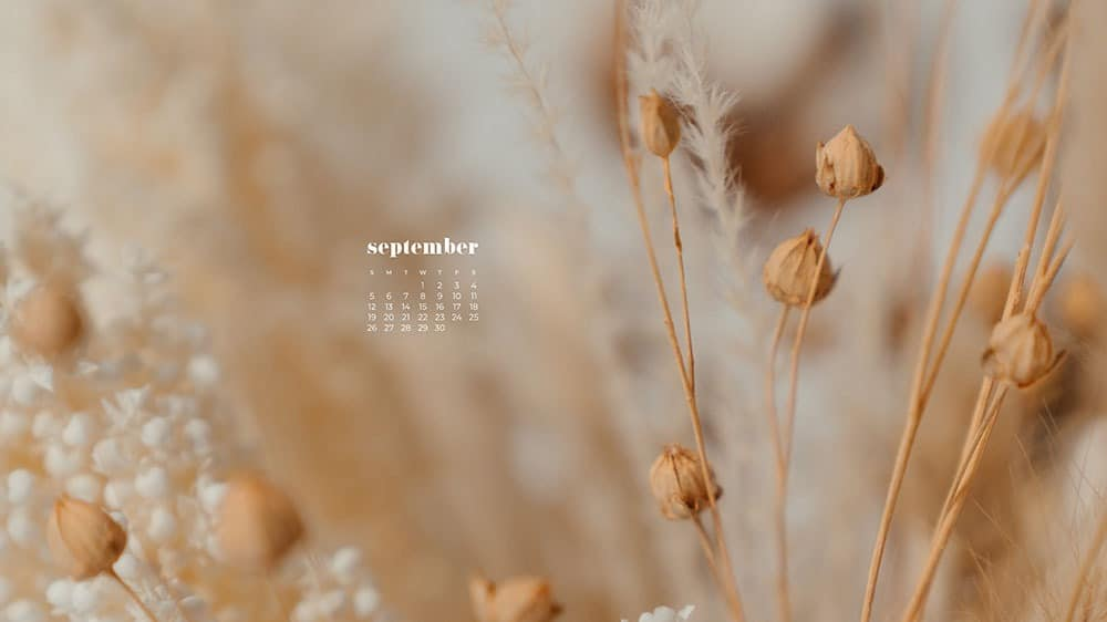 Creamy colored fall foilage FREE wallpaper calendars in Sunday and Monday starts + no-calendar options. 35 designs for both desktop and smart phones!