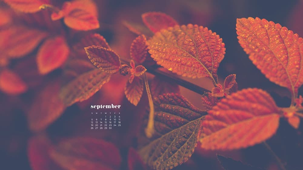 pretty red fall leaves FREE wallpaper calendars in Sunday and Monday starts + no-calendar options. 35 designs for both desktop and smart phones!