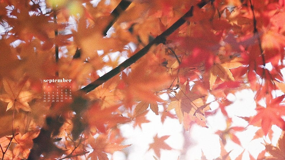 pretty fall tree in red and orange FREE wallpaper calendars in Sunday and Monday starts + no-calendar options. 35 designs for both desktop and smart phones!