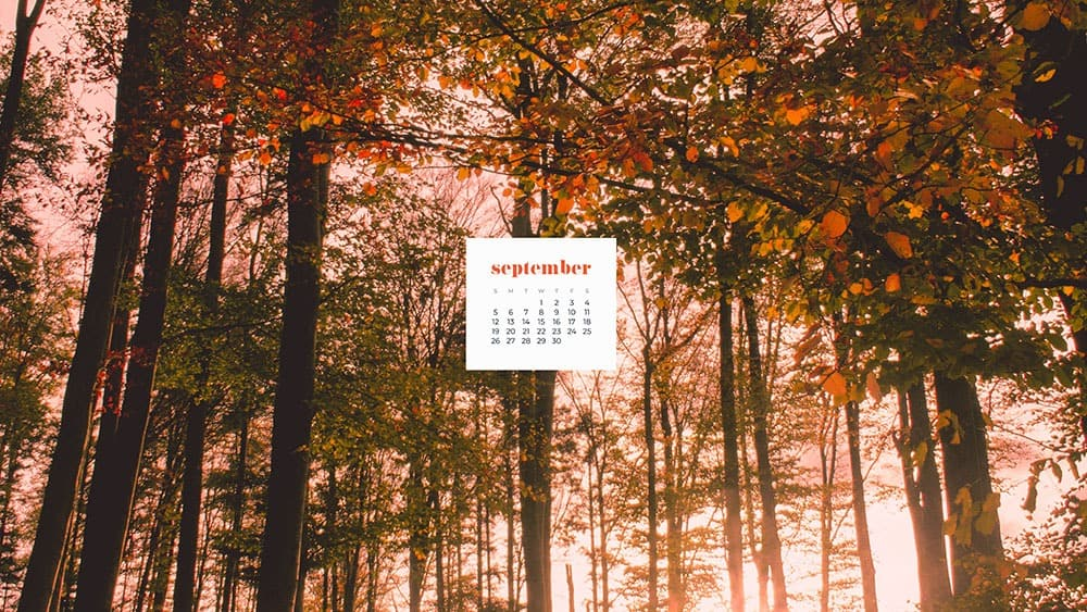 tree forest in the fall September 2021 - FREE wallpaper calendars in Sunday and Monday starts + no-calendar options. 35 designs for both desktop and smart phones!