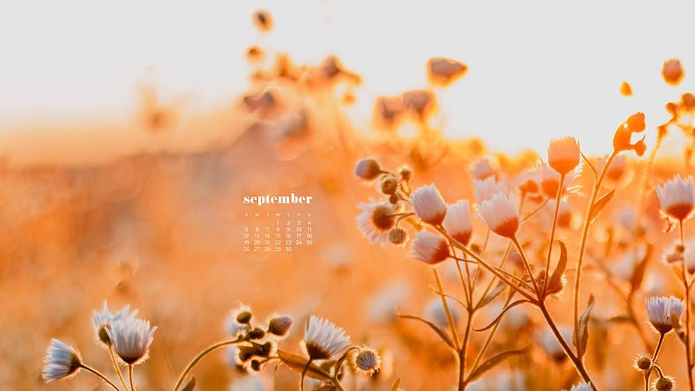 golden hour on an autumn field FREE wallpaper calendars in Sunday and Monday starts + no-calendar options. 35 designs for both desktop and smart phones!
