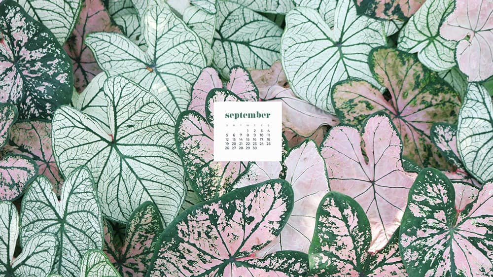 pretty pink and green plants FREE wallpaper calendars in Sunday and Monday starts + no-calendar options. 35 designs for both desktop and smart phones!