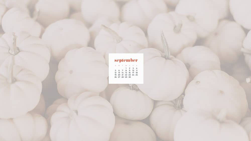 lots of small white pumpkins September 2021 - FREE wallpaper calendars in Sunday and Monday starts + no-calendar options. 35 designs for both desktop and smart phones!