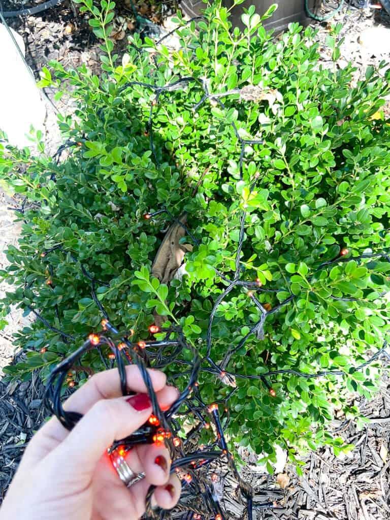orange LED bush lights for halloween