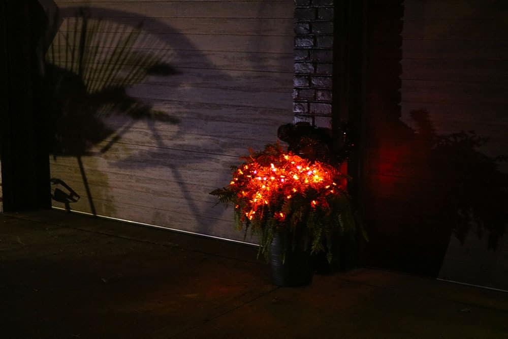 plant with orange lights