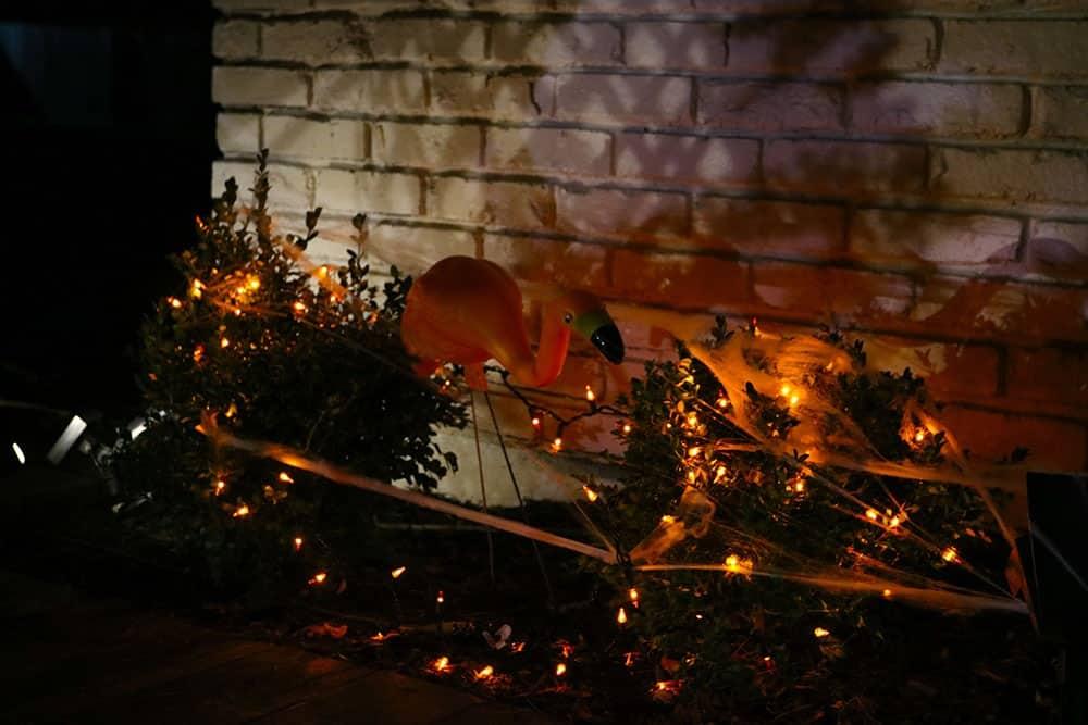 orange lights in bushes for halloween with orange flamingo