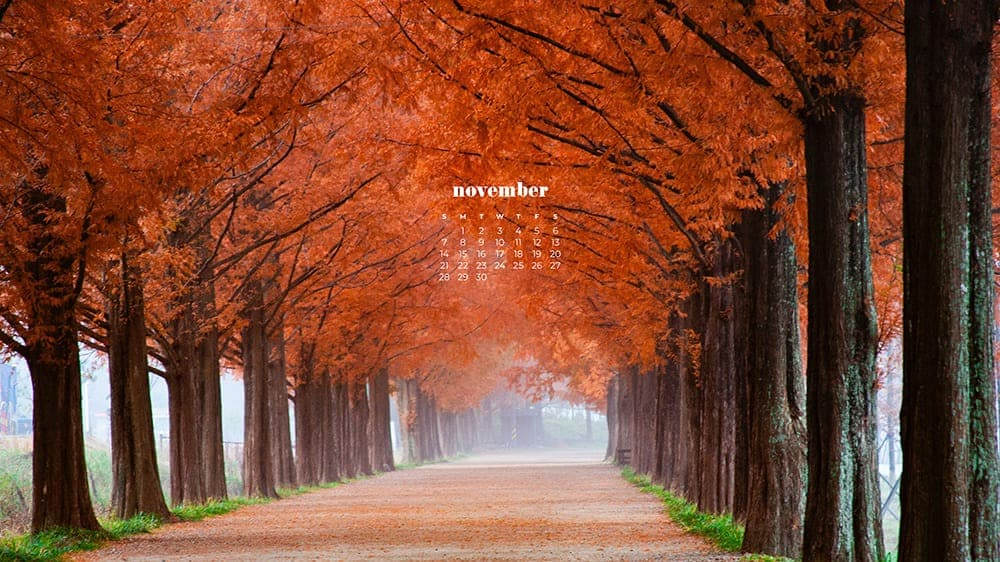 pathway with red trees in fall plus a calendar November - FREE wallpaper calendars in Sunday & Monday starts + no-calendar designs. 35 options for both desktop and smart phones!