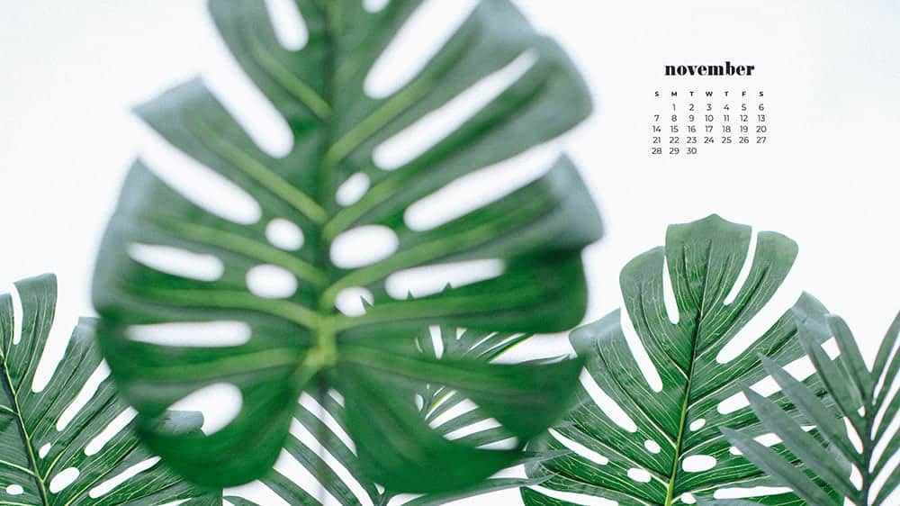 monstera leaves on a white background November - FREE wallpaper calendars in Sunday & Monday starts + no-calendar designs. 35 options for both desktop and smart phones!