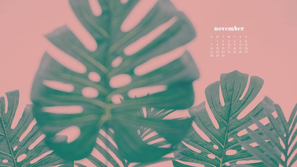 monstera leaves on a pink background November - FREE wallpaper calendars in Sunday & Monday starts + no-calendar designs. 35 options for both desktop and smart phones!